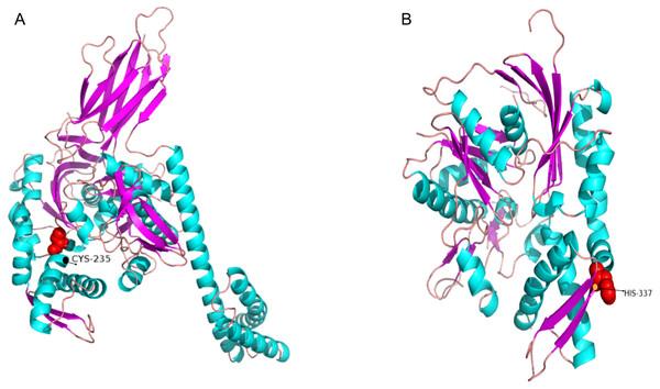 The 3D-structural models of HSPA4L (A) and HSPA13 (B).