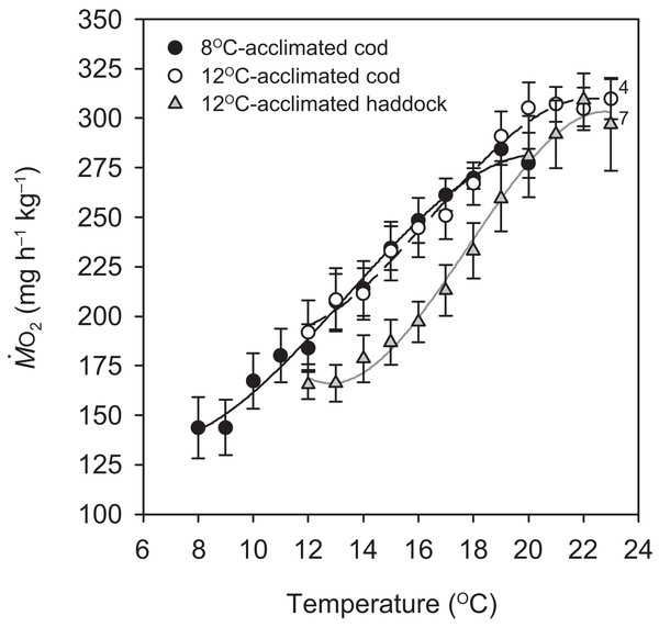 Metabolic rate of cod and haddock during warming.