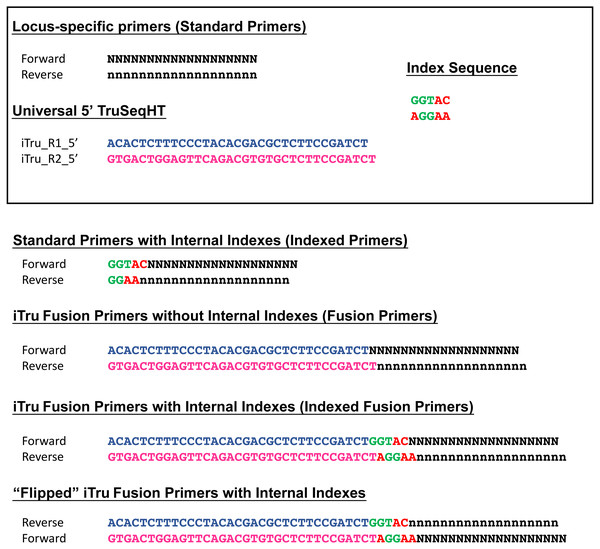 "Examples of possible primer types (Table 3), including ""flipped"" fusion primers."