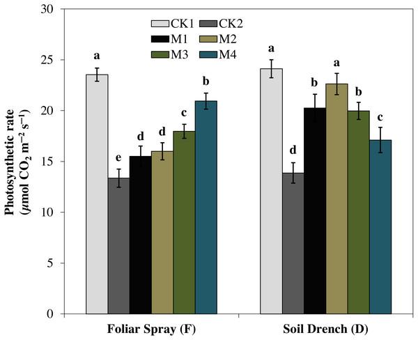Effects of melatonin on net photosynthetic rate in maize seedlings under drought stress.
