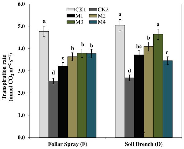 Effects of melatonin on transpiration rate in maize seedlings under drought stress.