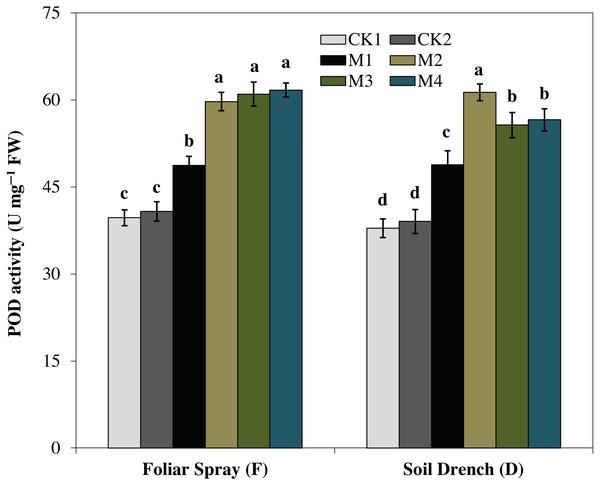 Effects of melatonin on peroxidase (POD) activity in maize seedlings under drought stress.