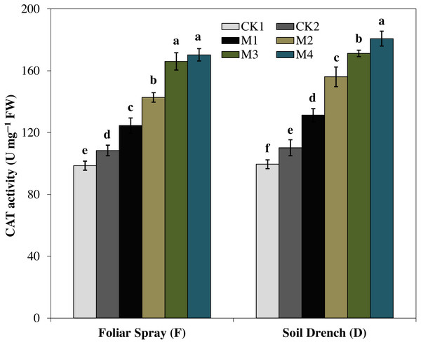 Effects of melatonin on catalase (CAT) activity in maize seedlings under drought stress.