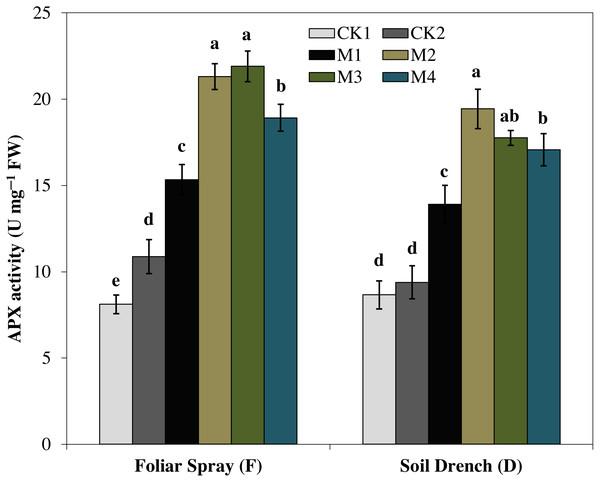 Effects of melatonin on ascorbate peroxidase (APX) activity in maize seedlings under drought stress.