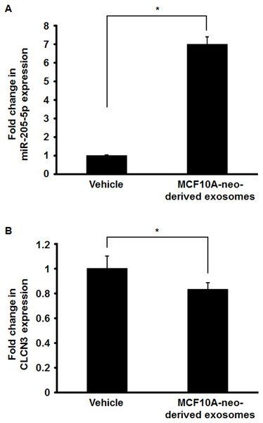 Effect of the treatment with MCF10A-neo-derived exosome on the expression of miR-205-5p and CLCN3 in MCF10A-ErbB2 cells.