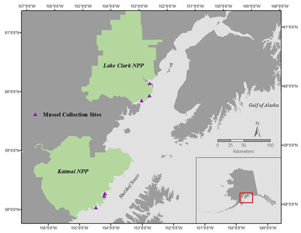 Mussel sampling sites in Lake Clark National Park and Preserve (NPP) and Katmai National Park and Preserve (NPP).