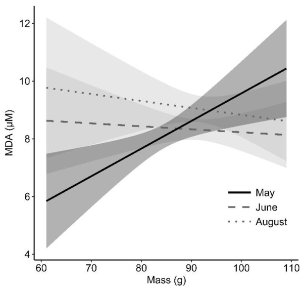 Effect of mass on MDA (oxidative damage) levels for each sampling period in an eastern chipmunk population.