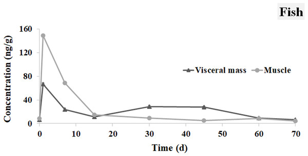 IVM concentrations in the visceral mass and muscle of brocarded carp.