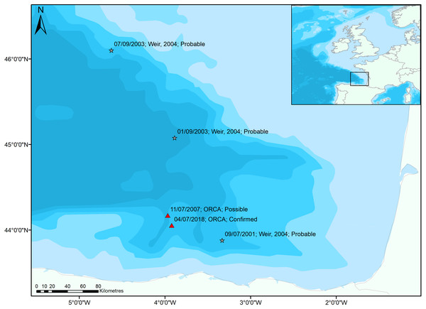 Sightings of True's beaked whales in the Bay of Biscay.