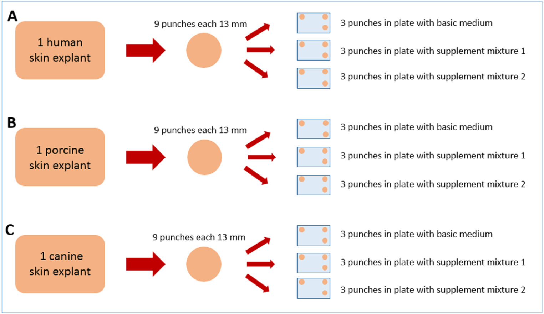 50//Cs Stellar Scientific 12-Well Tissue Culture Treated Plates