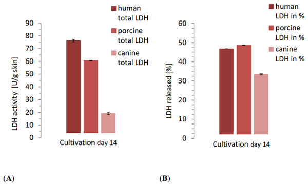 Comparison of the total released LDH of each species at the end of the study with the relative LDH release as percentage of the positive control of each species.