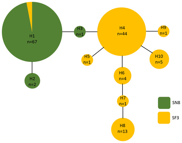 Haplotype network of Aglaophenia latecarinata sequences.