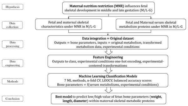 Methodology flow for bone parameters–serum metabolism study.
