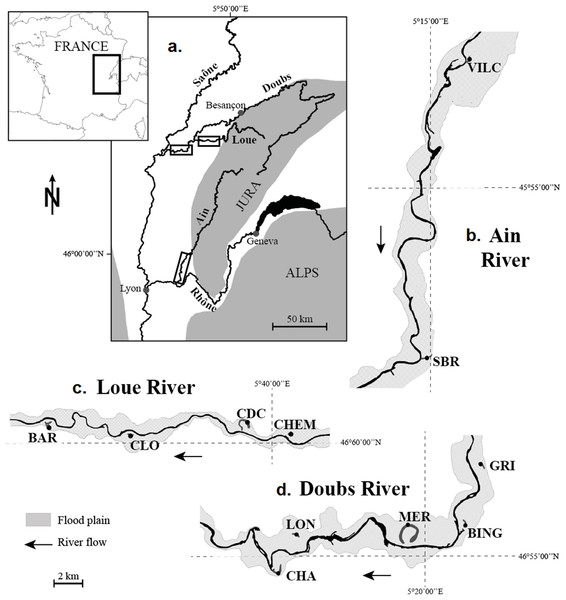 Location of the 11 studied wetlands. (A) Location of the river network under study on the map of France. (B) The Ain River. (C) The Loue River. (D) The Doubs River.