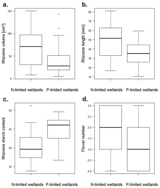 Boxplots of traits of N. lutea that differed significantly between the nitrogen- and the phosphorus-limited wetlands according to the t-test.