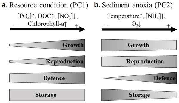 Recapitulative scheme of the variation of N. lutea sets of traits in response to environmental variations in the studied wetlands.