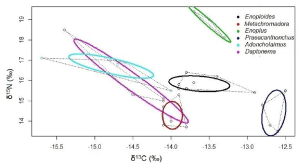 Bivariate isotopic niche spaces of six nematode species from an intertidal flat.