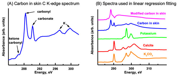 Carbon K-edge XANES reference spectra used in the initial linear regression fitting of the carbon image sequence and the organic carbon spectrum derived from the skin.