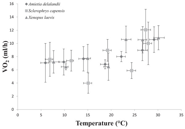 Increasing standard metabolic rates (measured as oxygen consumption, VO2) as a function of temperature in African anurans.