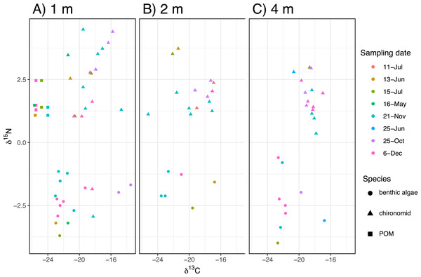 The biplot of carbon and nitrogen isotope values of the samples including the chironomid larvae (Chironomus acerbiphilus) and benthic diatoms (Pinnularia acidojaponica) and POM in the sampling depth and months.