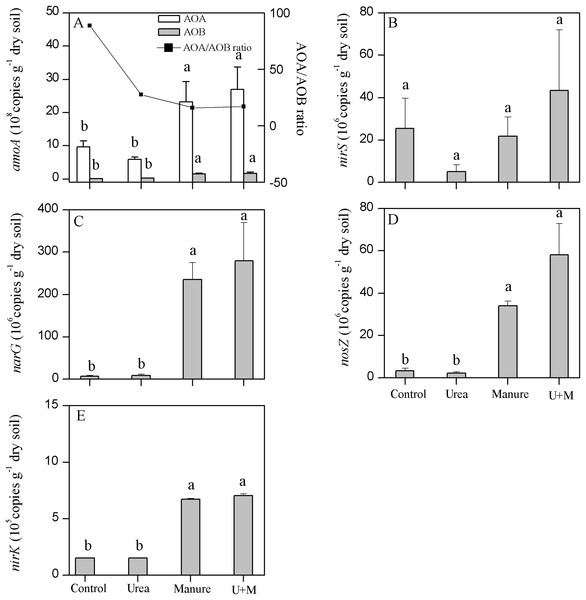 Copy numbers of archaeal (AOA) and bacterial (AOB) amoA (A), nirS (B), narG (C), nosZ (D) and nirK (E) genes in soil as affected by the addition of treatments to plots in the drip-irrigated cotton field used in the study.