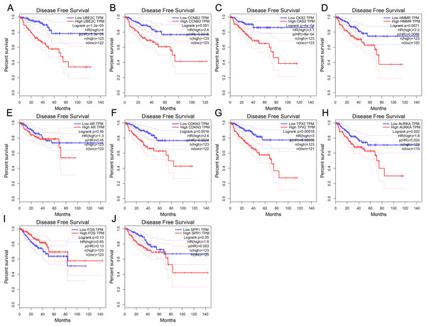 Disease-free survival curves of hub genes in prostate cancer from TCGA database.