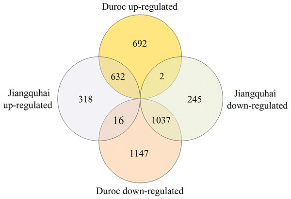 Venn diagram displaying the numbers of DEGs in the two groups.