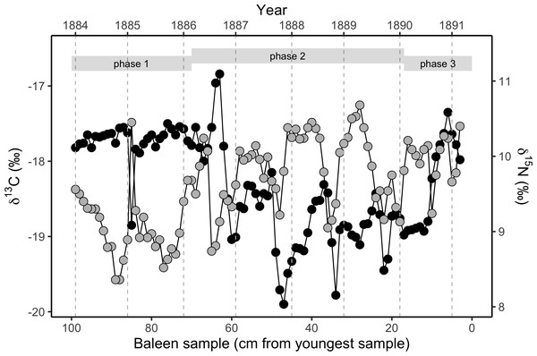 Variation in stable isotope values in the NHM blue whale, expressed as δ13C (black circles, left y-axis) and δ15N (grey circles, right y-axis).