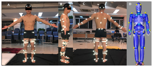 Location of retro-reflective markers and EMG sensors on the gymnasts (A–C), 19 segments human model generated by GEBOD in LifeMOD™ (D).