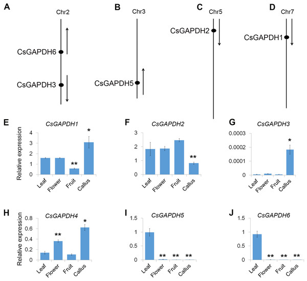 Genomic distribution and expression patterns of CsGAPDH genes.