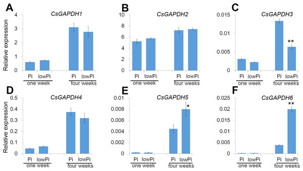 The CsGAPDH genes expression under Pi-deficiency in P. trifoliata.