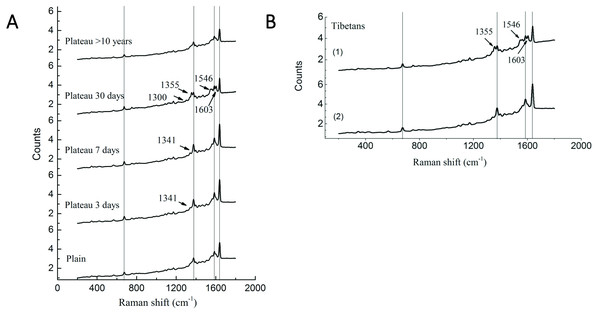 Raman spectra of RBC in Tibetans and plain population.