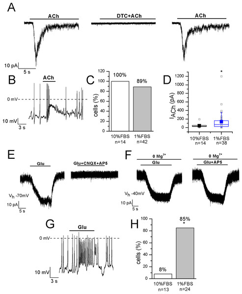 Differentiated F-11 cells display responses to acetylcholine and glutamate.
