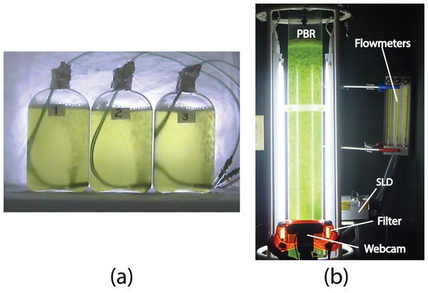 """(A) The three Roux bottles for the off-line experiments (A and B), and (B) the column photobioreactor (PBR) for the on-line experiments (1–5), Super Luminescent Diode (SLD); see """"Materials and Methods."""""""
