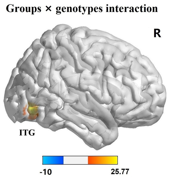 Interaction analysis of groups and genotypes.
