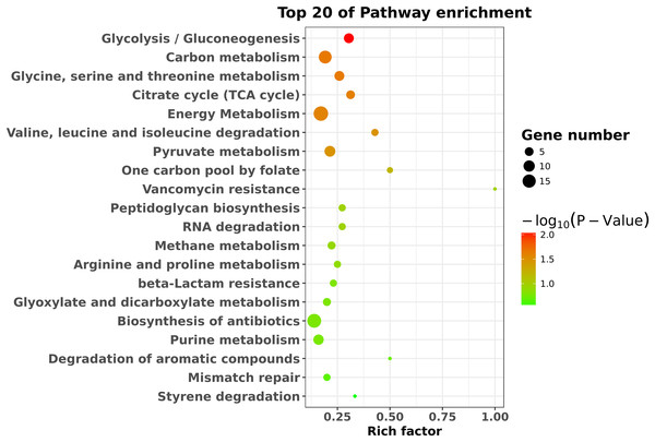 KEGG pathway enrichment analysis of the differentially expressed genes.