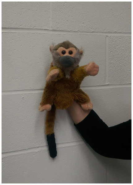 The squirrel monkey puppet used as a demonstrator in Experiment 1.