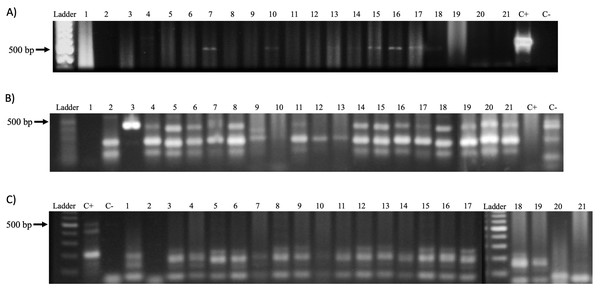 PV detection in samples.