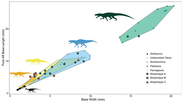 Relationship between base width and fore-aft base length divided by taxon.