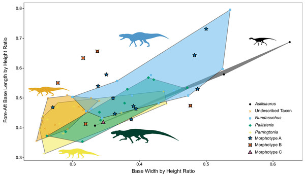 Relationship between base width and fore-aft base length divided by taxon controlled for size.