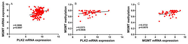 PLK2 expression may not be associated with MGMT methylation in GBM.