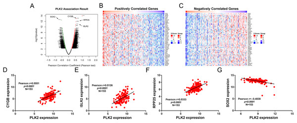 Differentially expressed genes correlated with PLK2 in GBM.