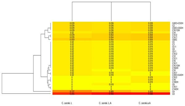 Chlorella sorokiana's acylcarnitines profiles heatmap.