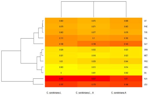 Chlorella sorokiana's amino acids (AA) profiles heatmap.