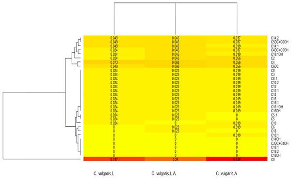 Chlorella vulgaris's acylcarnitines profiles heatmap.