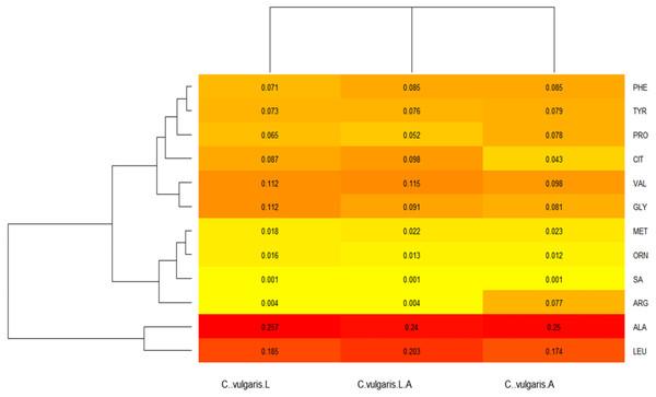 Chlorella vulgaris's amino acids (AA) profiles heatmap.