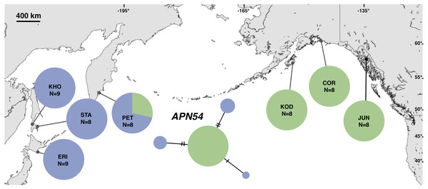 Unrooted minimum spanning nuclear APN54 haplotype network and haplotype frequencies.