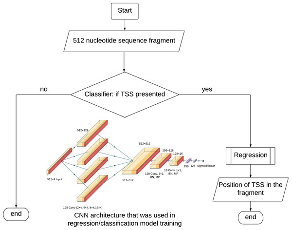 TransPrise algorithm. Inset: CNN architecture that was used in classification/regression model training.
