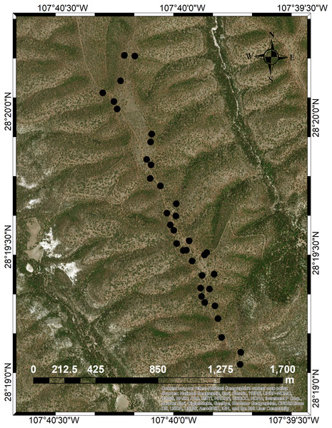 Map of the Pinus cembroides seed stand Mesa Azul (PC-MA) and the positions of the 34 sample trees genetically analyzed (black circles).