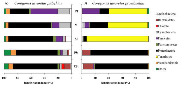 Phylum composition of microbiota from gut content of C. l. pidschian (A) and C. l. pravdinellus (B).